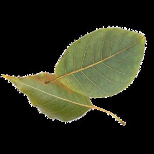 mediation leaf